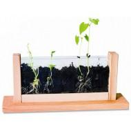 Beobachtungsstation Wurzeln und Wachstum