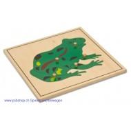 Der Frosch- Holzpuzzlekarte in der Größe 24 x 24 cm