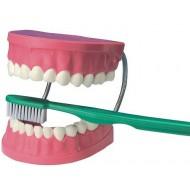 Zahnpflege-Demo-Set mit Bürste, 4-7 Jahre