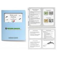 Aufbauende Lernkartei - Wale und Delfine